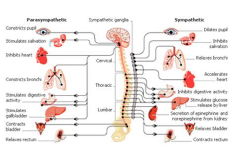 mal di testa da cervicale farmaci mal di testa da cervicale sintomi cura e rimedi per la