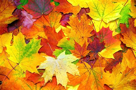 fall has officially started 5 tips to enjoy