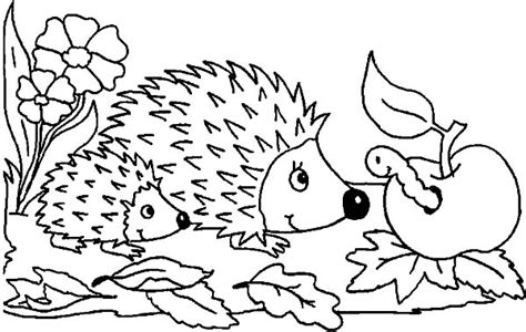 baby hedgehog coloring page online free coloring pages for kids coloring sun part 7 memes