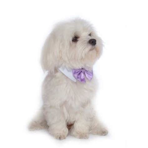 neckties for dogs bow ties neckties bowwowsbest