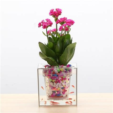 Plants And Planters by Buy Boskke Cube Planter In India Farmandgarden In