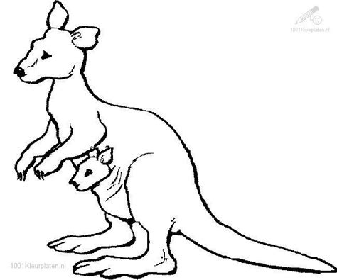 Kangaroo Coloring Pages 171 Free Coloring Pages Kangaroo Coloring Page