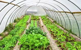 organic house tending a greenhouse