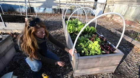 homegrown winter gardening   build