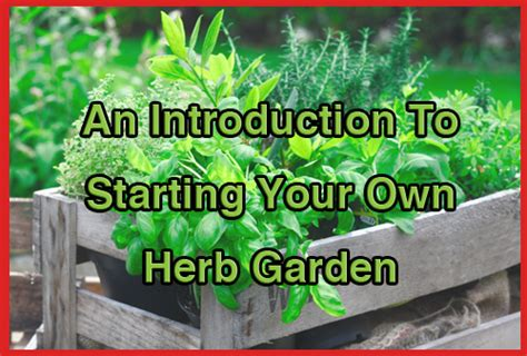 how to start your own herb garden activist awake better health mizzeliz working for you page 3