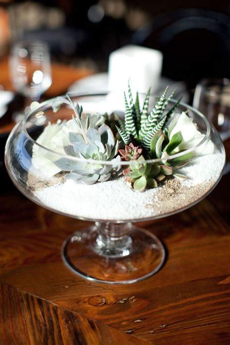 best 25 succulent bowls ideas on