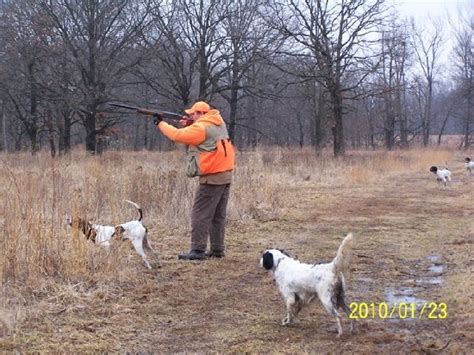 english setter finished dogs for sale dogwood bird dogs offers english setters hunting dogs
