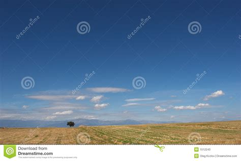lone landscaping desert landscape with lone tree stock photos image 1512243
