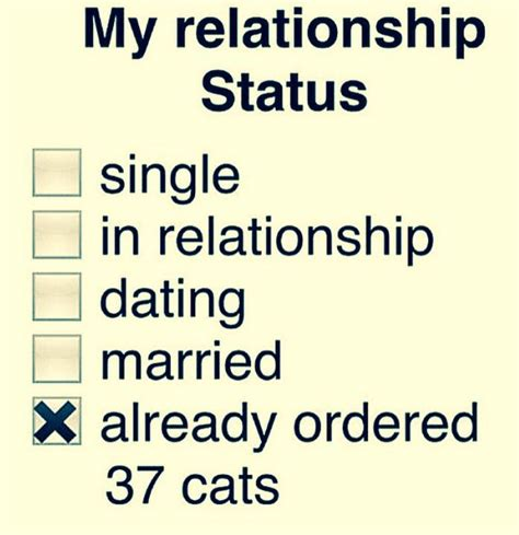 Single Relationship Memes - the 25 best cat lady meme ideas on pinterest crazy cat