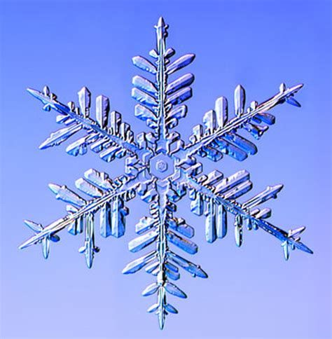 real snowflake snow crystals