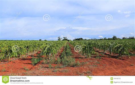 fields for growing fruit trees fruit tree in field stock photo image 41679773