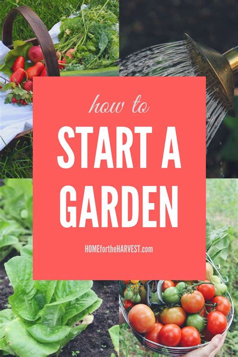 How To Start A Vegetable And Fruit Garden 2822 Best Backyard Vegetable And Fruit Gardening Images