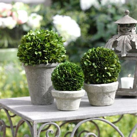 real topiary balls 7 best images about cool ideas on models