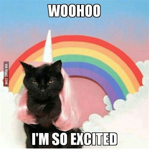 Woohoo Meme - 25 best memes about unicorn kitty unicorn kitty memes