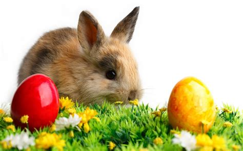 free wallpaper easter bunny free download easter 2013 hd wallpapers for android