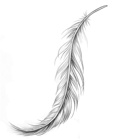 tattoo feather drawing feather drawing fj 228 der f 246 r placering p 229 underarm art