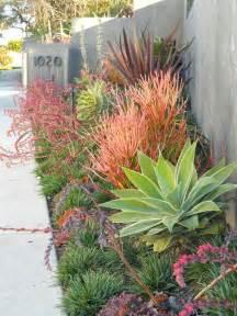 modern drought tolerant xeriscape garden even the desert is far from devoid of beautiful plant