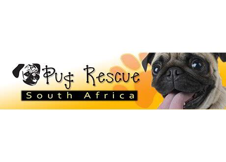 pug rescue cape town charities federal clearing and forwarding