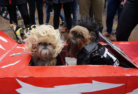 puppy parade 100 tompkins square parade 2015 the dogist tompkins square park