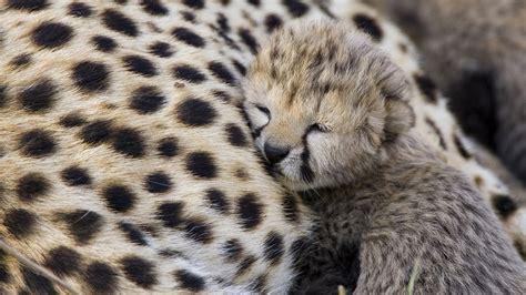 Animals cute sleep HD Wallpapers 1920x1080 free download