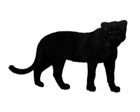 significato simbolo totem pipistrello e tatuaggio totem della pantera significato simbolo e tatuaggio