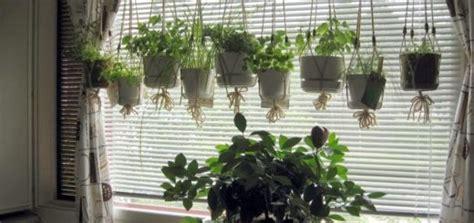 terbaru daftar harga tanaman hias   lengkap  murah