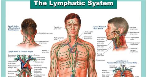 How To Detox Your Lymphatic System Naturally by Clean Your S Drains How To Detoxify Your Lymphatic