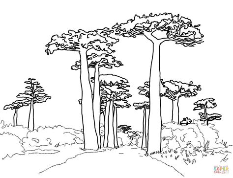 baobab tree coloring page avenue of the baobabs coloring page free printable