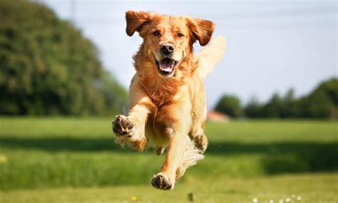 when do puppies walk walking in hastings hastings walking