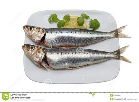 Sarden Mackerel Botan A1 2 two sardines royalty free stock image image 25935406
