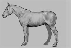 3d Animal Sketch 3 Tx sketch wetcanvas
