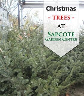 christmas trees sapcote garden centre