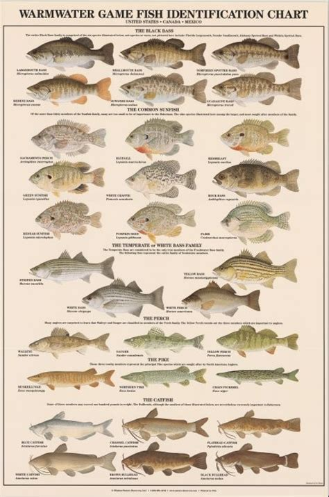 printable fish poster warmwater game fish identification poster boys room