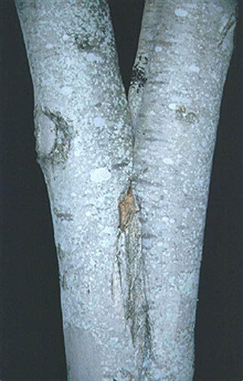 trunk  branch structure maintenance landscape
