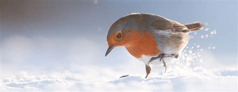 the nature of christmas natures home magazine uncovered