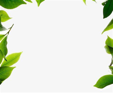 html imagenes sin borde borde de la hoja hojas plantas frontera verde imagen