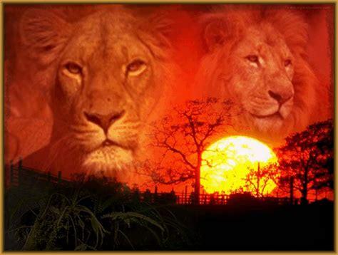 imágenes de leones para whatsapp fondos de leone s bing images