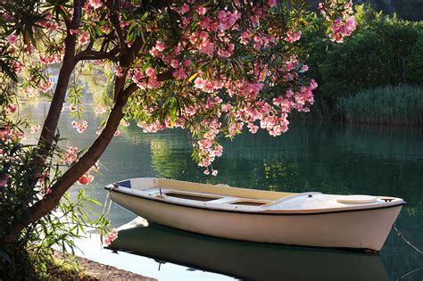 the boat on the river boat on the river l oasis floral design