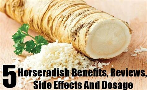 Moringa Detox Side Effects by 25 Best Ideas About Horseradish Benefits On