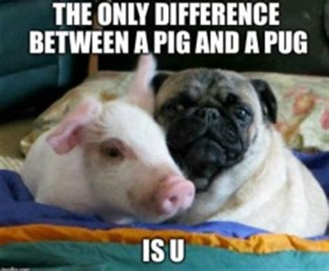 difference between and pugs ads can give you great results if done correctly check out this formula for