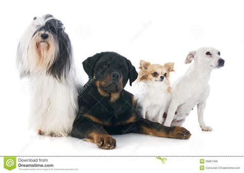 four dogs four dogs royalty free stock photo image 35867405