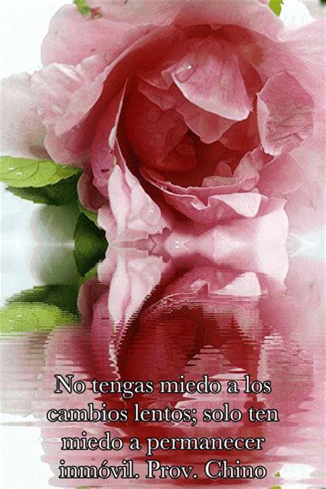 imagenes variadas originales imagen gif de una rosa con frases imagenes y frases de