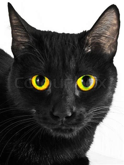 Caterpillar Ct11248 Free Box Yellow Black black cat portrait stock photo colourbox