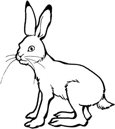 arctic hare coloring page az coloring pages arctic hare clipart cliparthut free clipart