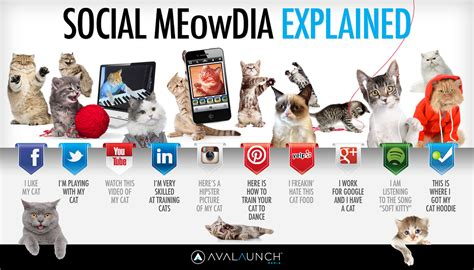 Social Media Meme Definition - the ultimate beginner s guide to finding your audience in