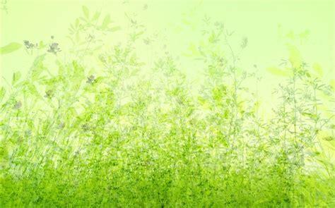 imagenes verdes fondo de pantalla fondos verdes naturales imagui