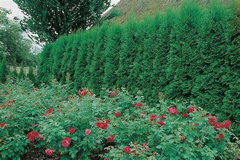 Schmale Beete Vor Hecke Und Mauer Bepflanzen by Hecke Als Grundst 252 Cksgrenze Was Gibt Es Zu Beachten