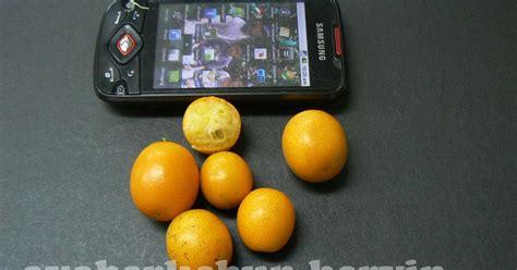 Benihbijibibit Buah Jeruk Tong Heng ayo berkebun jeruk tong heng