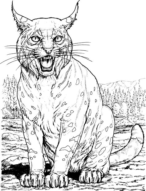 coloring pages of wild cats lynx color page big cat coloring pages