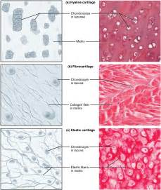 types of tissue in the human body